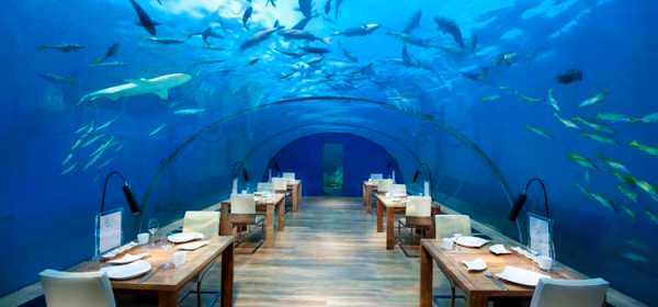 Dine below the waves in the world's only glass undersea restaurant.
